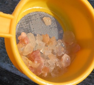Tibicos, or water kefir grains. The coloration on some of them resulted from using dark fruit syrups.