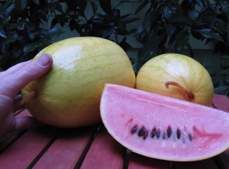 Golden Midget watermelons