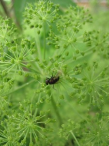 angelica with fly