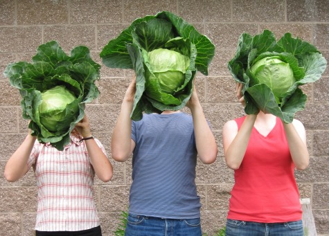 cabbage-heads-2-cropped
