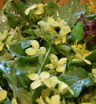 Salad with collard blossoms