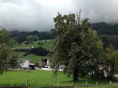 standard pear in the Zillertal