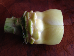 artichoke heart, nearly ready, small