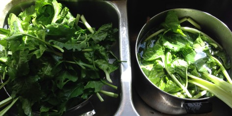 Cleaning chard